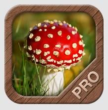 Une application pour les ramasseurs de champignons - Application pour reconnaitre les champignons ...